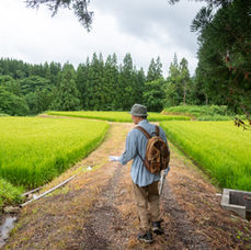 5. You arrive at ricefields