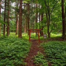 17. The Izanagi shrine ruins and its torii