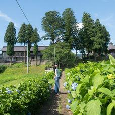 12. Dainichibo's hydrangea garden