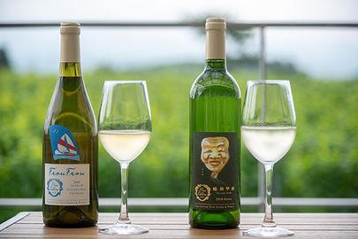 Nouveautés du vignoble de Pino Collina!