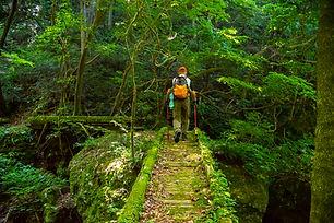 Mt. Atsumi's Pilgrimage
