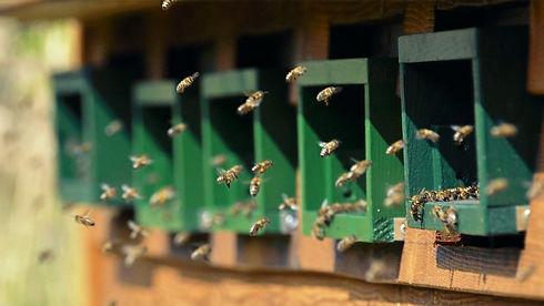 Leckerer-Honig-aus-der Region