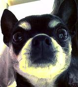 Ella's dog, Zelda
