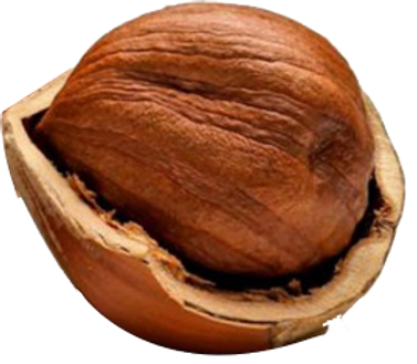hazelnut-seeds.png