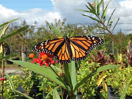 Butterfly-at-PTC-768x576.jpg