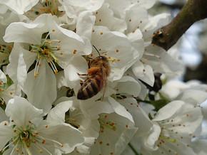 Unsere Bienen sind bedroht! Besuch bei einer Imkerin