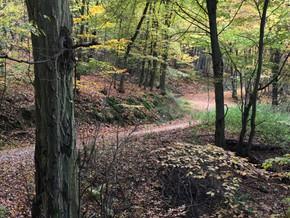 Unser Herbstwald - Eine Spielwiese für Achtsamkeitsübungen