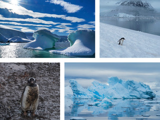 Antarctica Exhibit Opening May 25th