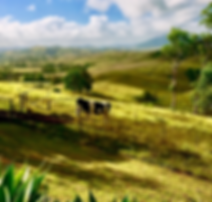 cow in paddock.PNG