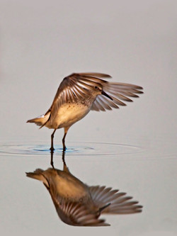 Photographing Birds in Open Spaces