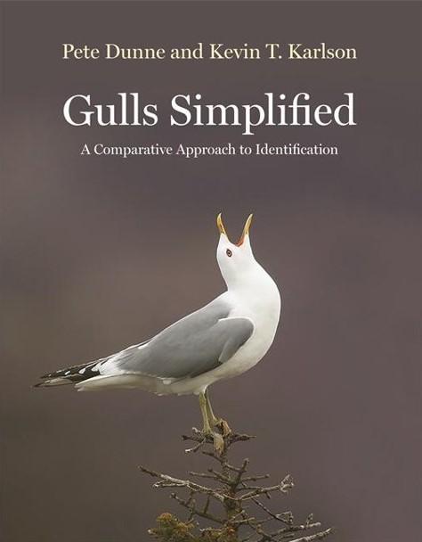 GullsSimplified