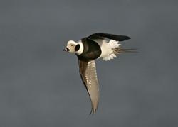 Advance Flight & Action Photography