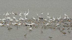 real life photo of mixed flock.jpg