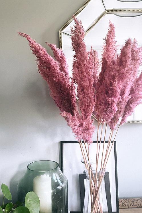 Pink Pampas x5