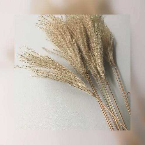 Dried Feathergrass x5
