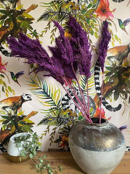 Purple Pampas Grass Bunch