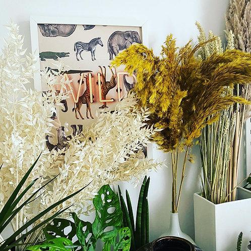Yellow Pampas Grass Bunch Of Five