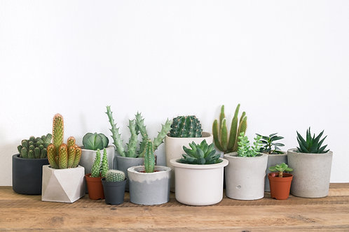 Succulent and Cacti Subscription