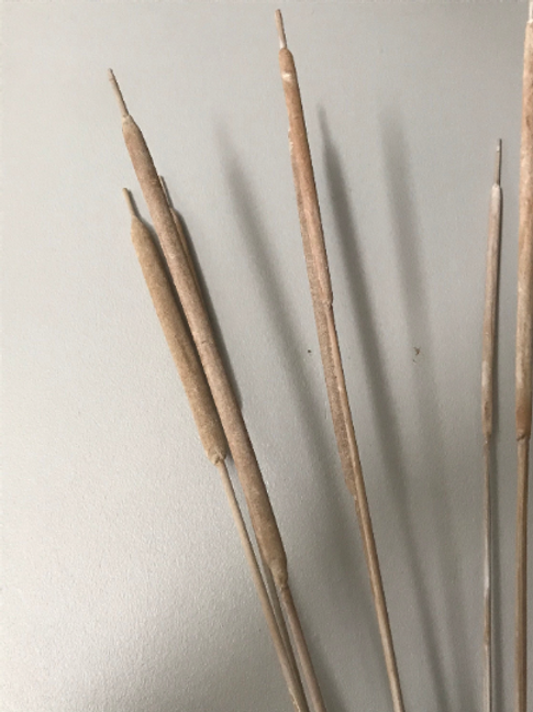 Dried Reeds - white. Bunch of 5