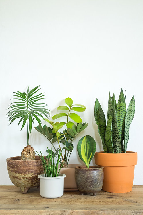 House Plant Subscription