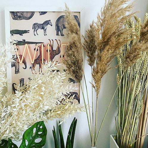 Natural Pampas Grass Bunch of 5