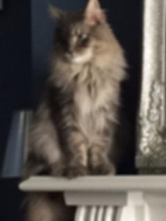 Cat for Website.JPG