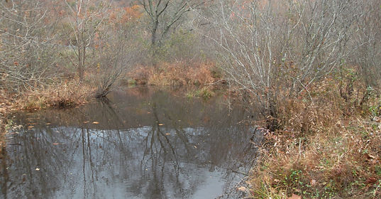 Litigation | Tennessee Clean Water Network