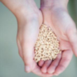 seeds_14651ac.jpg