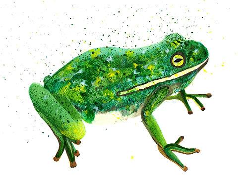 Frog - Digital Print *PRE-ORDER*