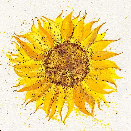 """Sunflower 3"" Postcard *PRE-ORDER*"
