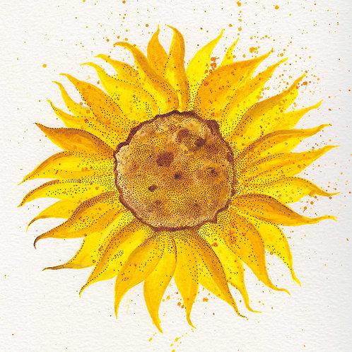 """Sunflower 1"" Postcard"