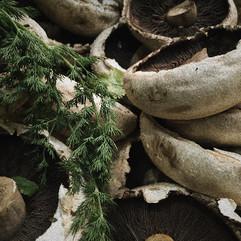 Brook Haven Farm | Organic Mushrooms 1