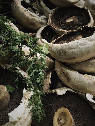 Brook Haven Farm _ Organic Mushrooms 5