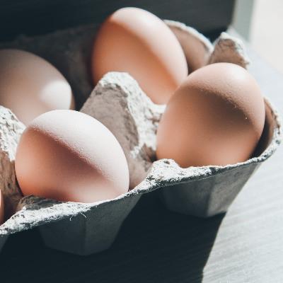 Brook Haven Farm | Eggs 1