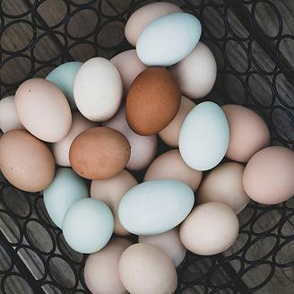 Brook Haven Farm | Free Range Eggs