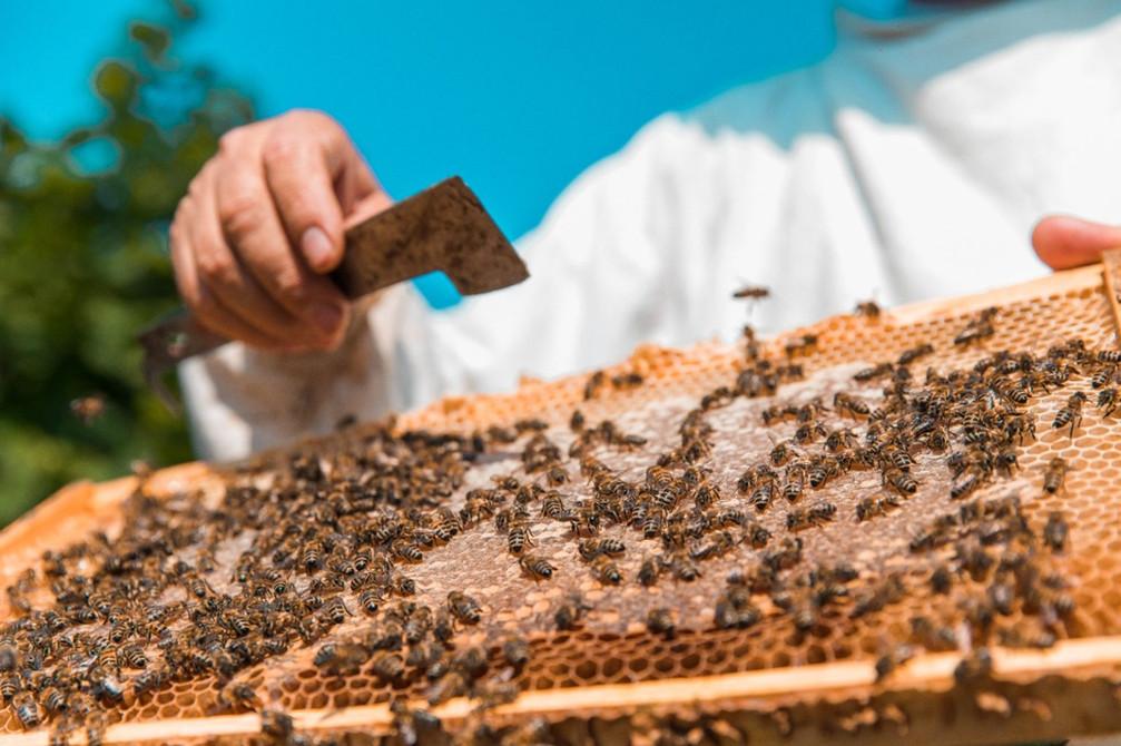 Organizaciones de Uruguay, Paraguay y Argentina trabajan juntas para sostener la apicultura en la región