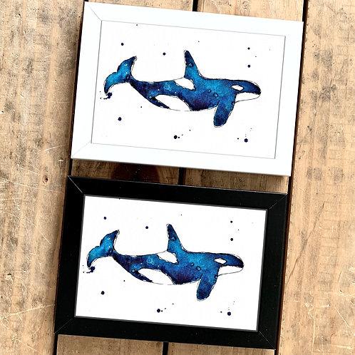 Orca Mini Watercolour Painting