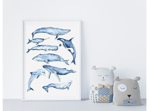 Marine Life Watercolour Poster