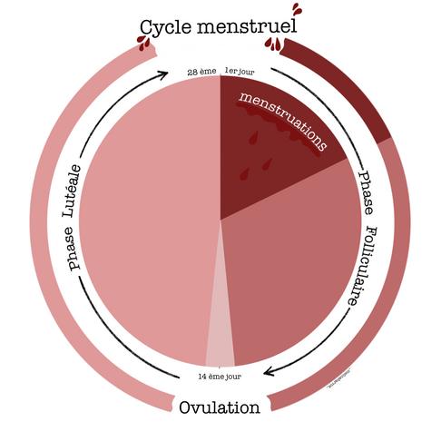 Le cycle menstruel {Partie 1}