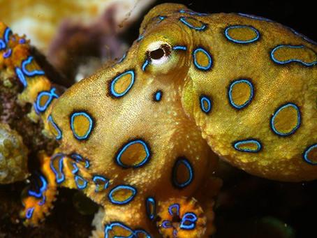 Os animais mais estranhos do mundo | Nível intermediário