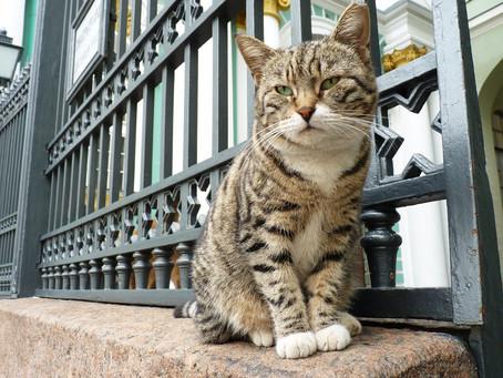 Os gatos do Hermitage | Nível básico