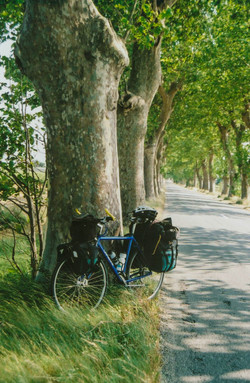 15_bike_and_plane_trees.jpg