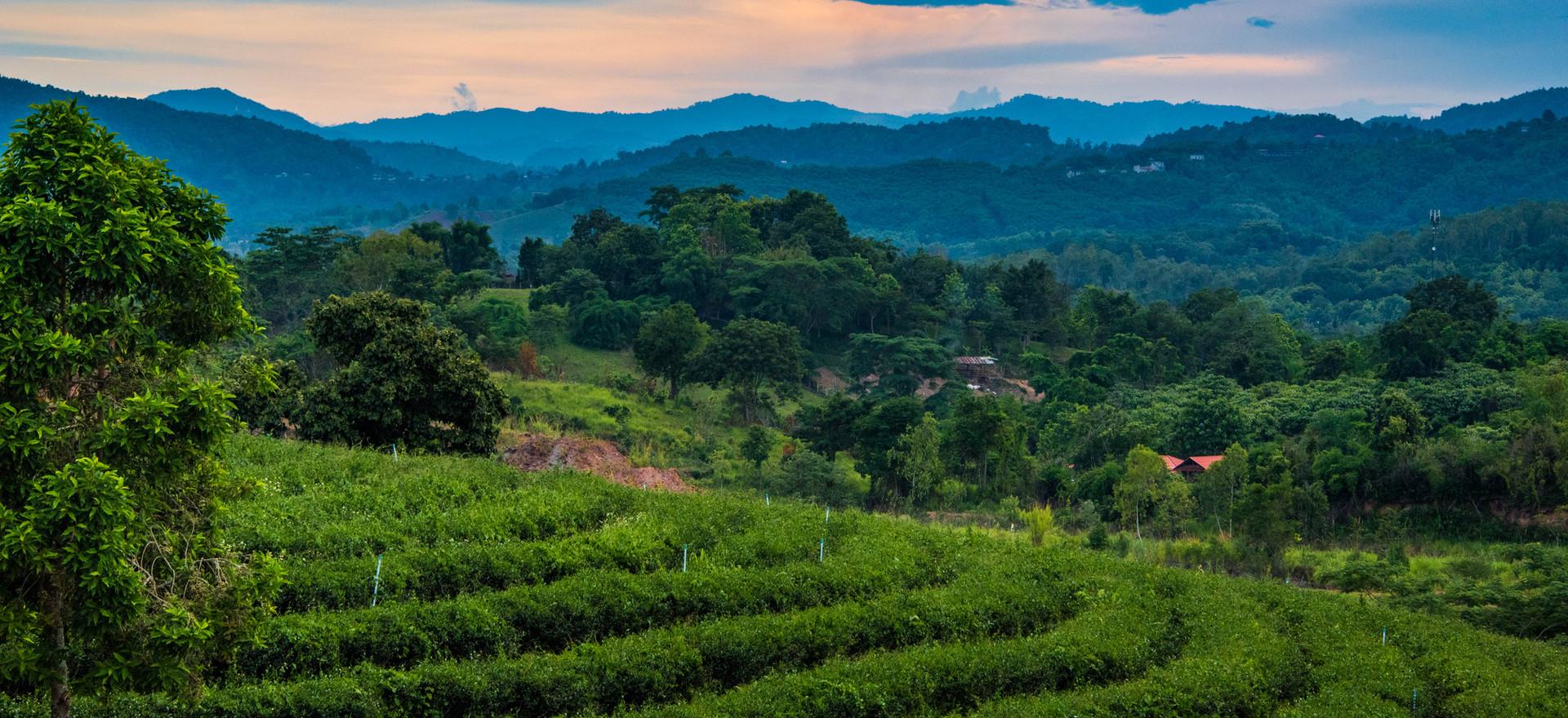 Thailand-2592.jpg