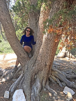 nancy-tree_edited.jpg
