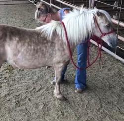 One Eyed Pony