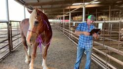 draft stallion oct 2019
