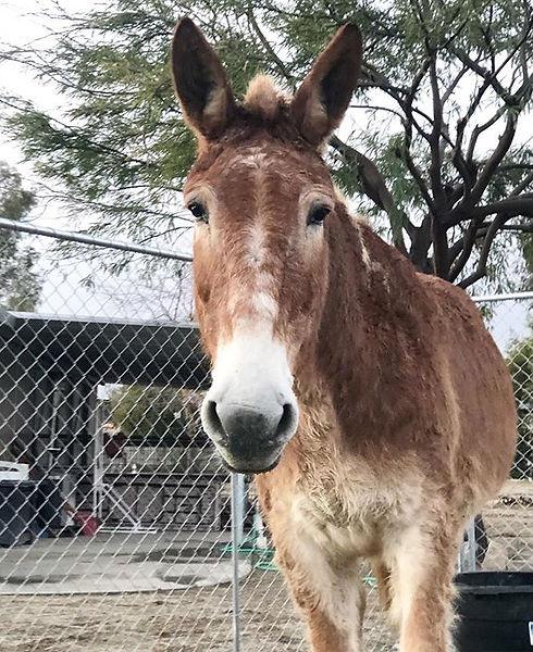 "Henri the draft mule says ""Happy Thursda"