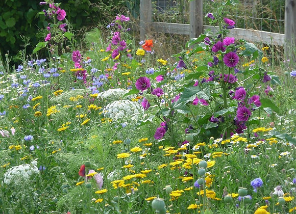 Instant Sunshine 100% seed mix, Over 45 Wildflower Species