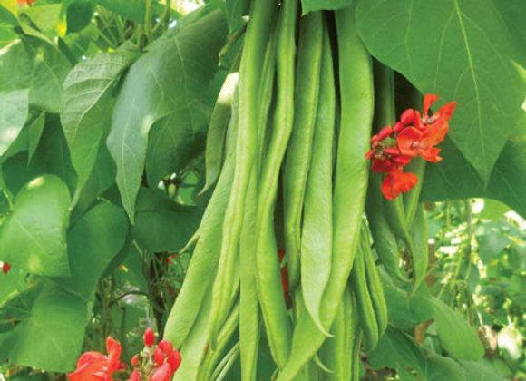 Runner Beans (Scarlett Emperor Variety) 55 Seeds