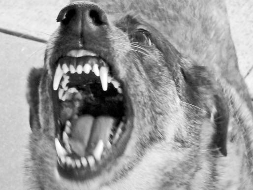 """נשיכת כלב - פיצוי של למעלה מ- 600,000 ש""""ח"""